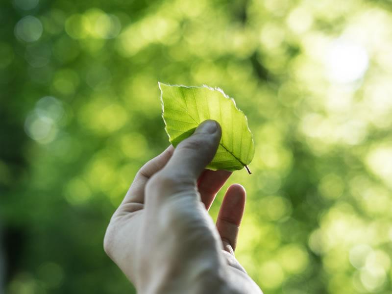 Sostenibilita Ambientale Dott Solari 4 Eng